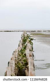 Wadden sea. Danish coastline