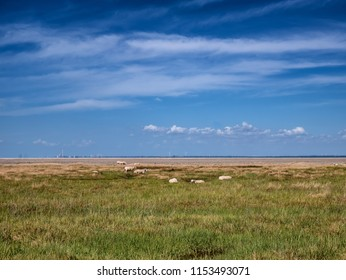 Wadden sea with Esbjerg harbor in background from the island Mando, Denmark