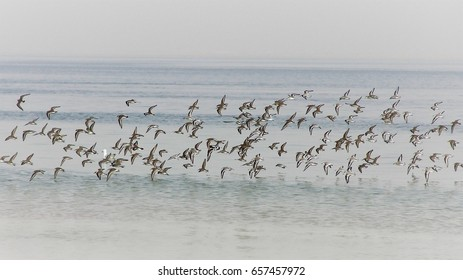 Wader birds take flight over calm water.