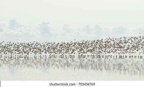 Waders Migrating birds