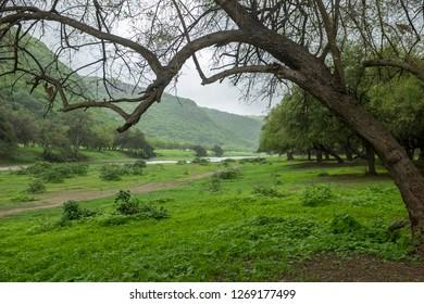 Wadi Darbat, near Salalah, Dhofar Province, Oman, during the khareef or monsoon season