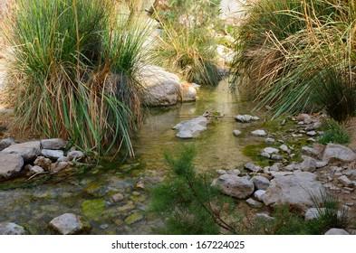 Wadi David, En Gedi Nature Reserve
