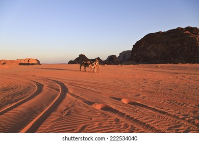 Wadi Rum at golden hour, Jordan