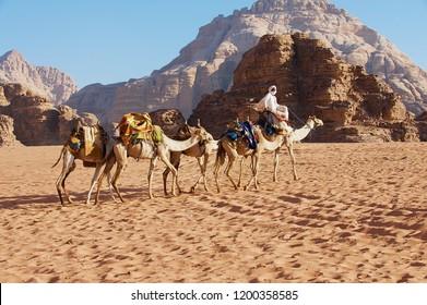 Wadi Rum, Jordan - August 21, 2012: Unidentified Jordanian man moves by the sand desert with his camels in Wadi Rum, Jordan.