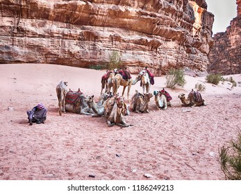 WADI RUM, JORDAN - JUNE 16, 2018: A small caravan of camels and their driver rests in the shade of the mountains of Wadi Rum in Jordan.