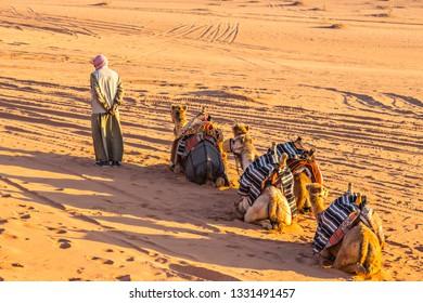 WADI RUM, JORDAN - March 2019: Camels caravan with bedouin man in Wadi Rum desert, Jordan