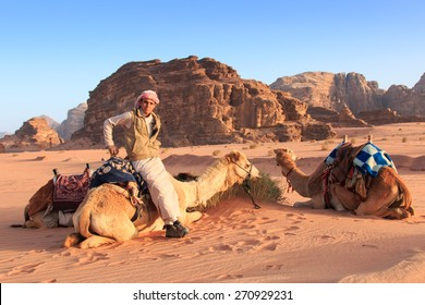 Wadi Rum, Jordan - March 24,2015: Bedouins preparing the camels for the tourist that will ride them at sunset in the Wadi Rum desert, Jordan