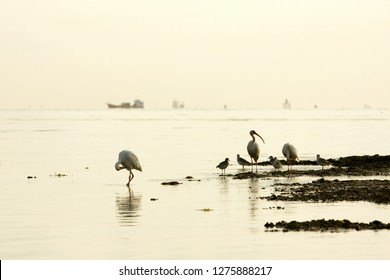Wading Birds in Foreground with Ocean Tankers in Background