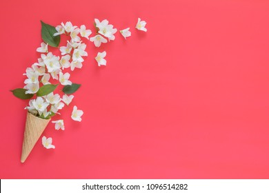 Waffle cone with jasmine flower bouquet on pink background. Flat lay, top view floral background.