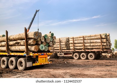 Wagon transport wood in wood factory