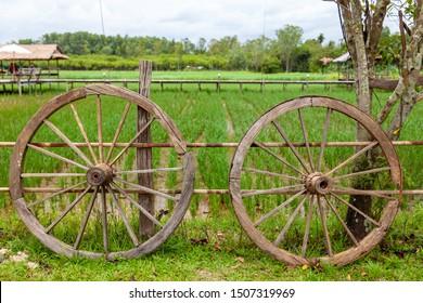 Wagon wheel. Old wagon wheel on rice farm.