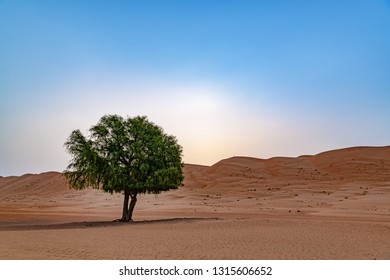 Wahiba Sands in Oman at early morning. It is known as Sharqiya Sands or Ramlat al-Wahiba.