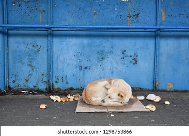 Waif dog sleeping on a wet cardboard by the old neglected blue metal wall of a bus station, hunks of bread spread around, winter day, Sofia City, Bulgaria