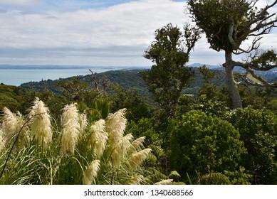 Waiheke Island Countryside