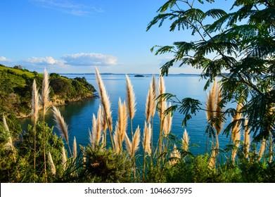 Waiheke Island, New Zaland
