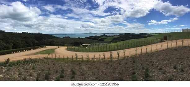 Waiheke, New Zealand, the island of wine