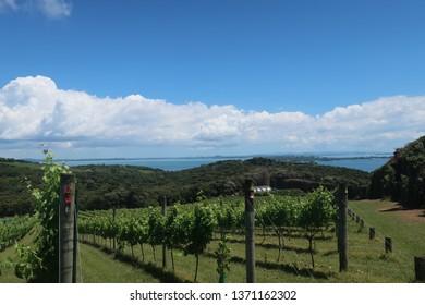 Waiheke Wine Island Views in New Zealand
