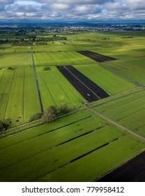 Waikato farmland landscape, New Zealand