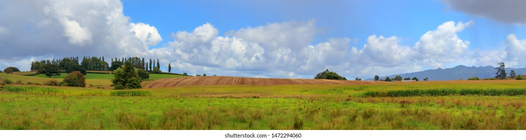Waikato fields landscape panorama, New Zealand