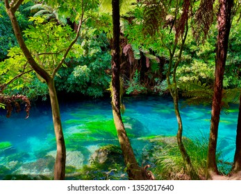 Waikato, New Zealand - March 22nd 2019. Blue Spring (Putaruru). Natural spring known for its clear blue water, with an adjacent walkway for picturesque hikes.