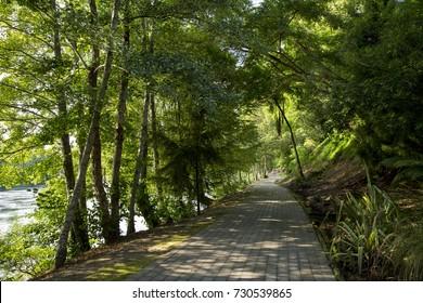 Waikato river walkway, Hamilton, New Zealand. Photographed in late summer 2017.
