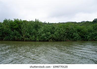 Wailua river ctuise