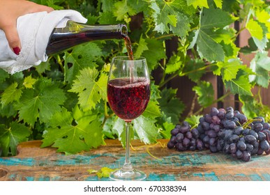 Waiter pouring a glass of red wine, outdoor terrace, wine tasting in sunny day, green vineyard garden background and red grape