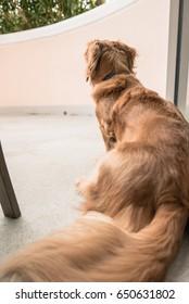 Waiting dog