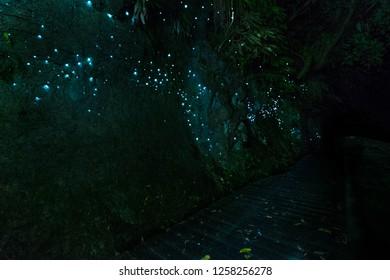 Waitomo Glowworm Caves, Waikato, New Zealand