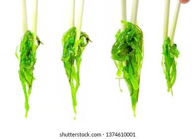 Wakame algae salad on white isolated background. Hiyashi wakame. Green salad with chopsticks for sushi.