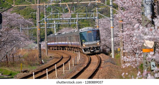 Wakayama, Japan - Circa April, 2018 : Kishuji Rapid train going around the bend surrounded by branches of  cherry blossom trees in bloom. Train JR west 225 series
