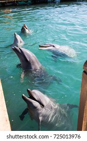 Wakayama Japan - Nov 2016: Visiting an outdoor pool area of Taiji Whale Museum where cute whale and dolphin live