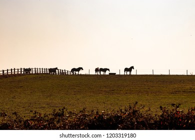 WAKEFIELD, YORKSHIRE, UNITED KINGDOM - OCTOBER 10, 2018: View of horses silhouetted on the skyline, from East Ardsley Reservoir