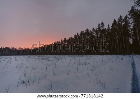 Waking Morning Sun Pines Stock Photo Edit Now 771318142 Shutterstock