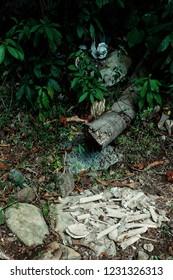 Walarano village, Malekula Island / Vanuatu - 9 JUL 2016 : human remains bones and skull at a traditional cannibal site next to a ground oven