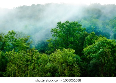 Wald, Luxemburg,environment,wood, forest