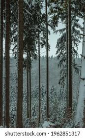 Wald tannen im Winter Schnee - Shutterstock ID 1962851317