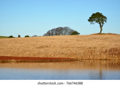 Waldegrave Pool with Lone Pine