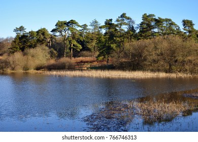 Waldegrave Pool & Pine Forest