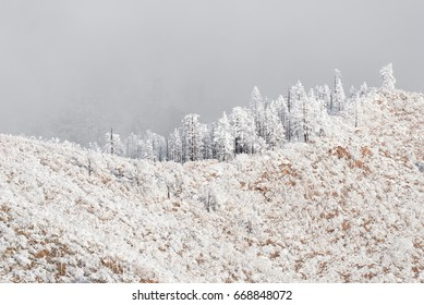 Waldo Canyon Pike National Forest winter snow storm.  Frozen snowy landscape. Trees forest on mountain fog mist misty foggy. Waldo Canyon located in Colorado Springs, Manitou Springs and Woodland Park