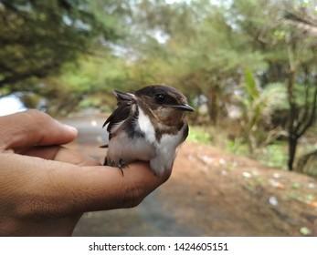 walet bird in the hand