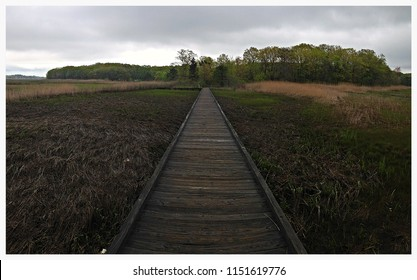 A walk along the Cheesequake marshes