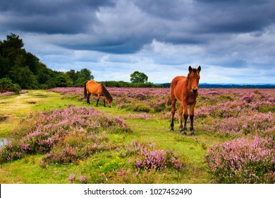 A walk around the new forest in Hamsphire south east England on a cloudy August day