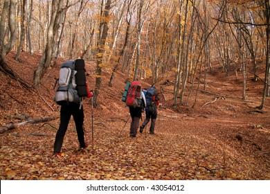 Walk in the autumn woods.