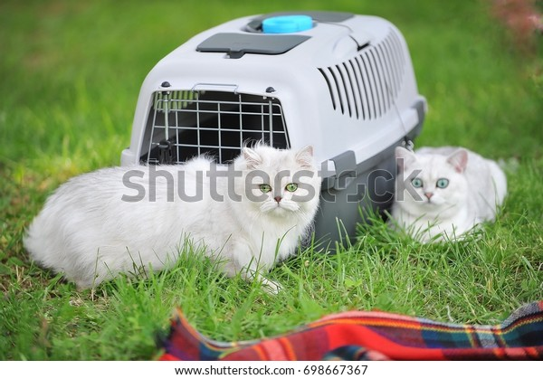 Walk with cats in a box for transportation of animals
