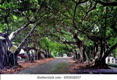 Walk, Coral Gables, Miami, Florida, USA