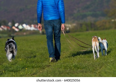 Walk with dogs
