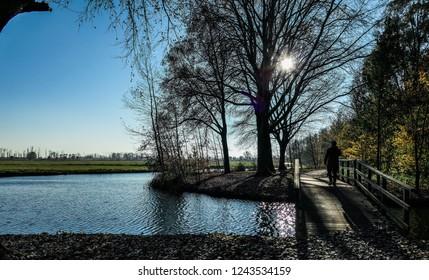 Walk in the forest (Biesbosch)