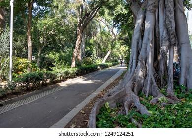 Walk inside the Sanabria Park of Santa Cruz de Tenerife, Canary Islands