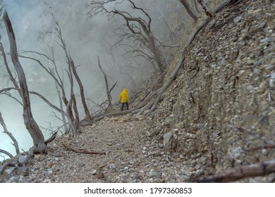 Walk into the thick fog in the forest